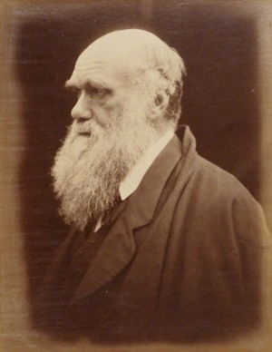 Charles Darwin by Julia Margaret Cameron albumen print, 1868 NPG P8 © National Portrait Gallery, London