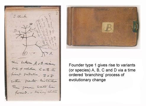 Transmutation notebook B