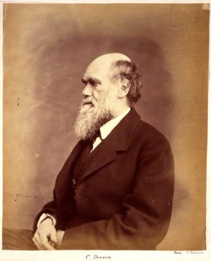 Charles Darwin by Ernest Edwards albumen print, 1865-1866 NPG x1500 © National Portrait Gallery, London